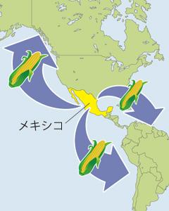 南北アメリカ大陸へとうもろこしは渡り主要農産物となります